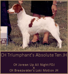 CH Triumphant's Absolute Ten JH