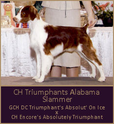 CH Triumphants Alabama Slammer