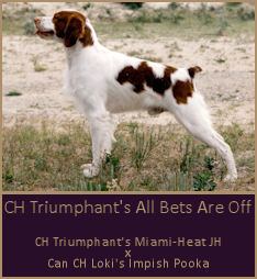 CH Triumphant's All Bets Are Off