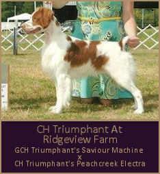 CH Triumphant At Ridgeview Farm