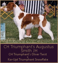 CH Triumphant's Augustus Smith JH
