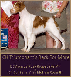 CH Triumphant's Back For More
