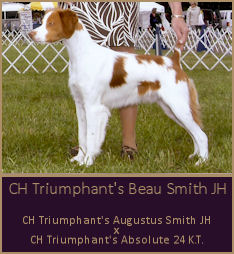 CH Triumphant's Beau Smith JH