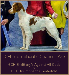CH Triumphant's Chances Are