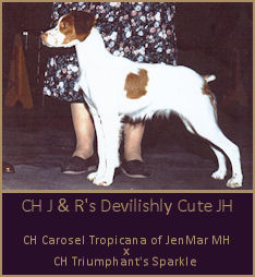 CH J & R's Devilishly Cute JH