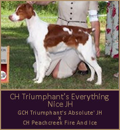 CH Triumphant's Everything Nice JH