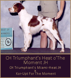 CH Triumphant's Heat o'The Moment JH