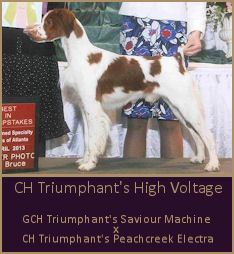 CH Triumphant's High Voltage