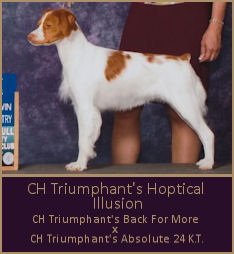 CH Triumphant's Hoptical Illusion
