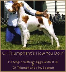 CH Triumphant's How You Doin'