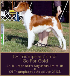 CH Triumphant's Indi Go For Gold