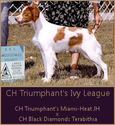 CH Triumphant's Ivy League