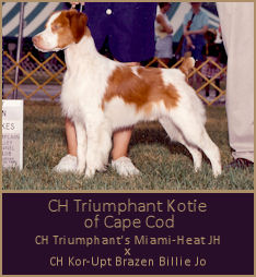 CH Triumphant Kotie of Cape Cod