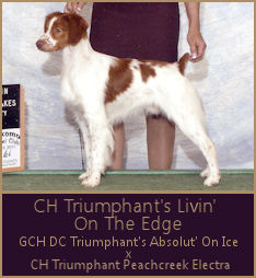 CH Triumphant's Livin' On The Edge