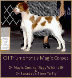 CH Triumphant's Magic Carpet