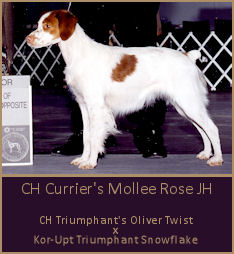 CH Currier's Mollee Rose JH