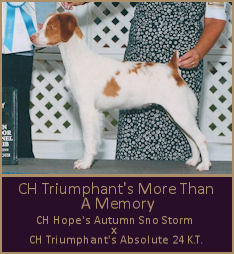 CH Triumphant's More Than A Memory