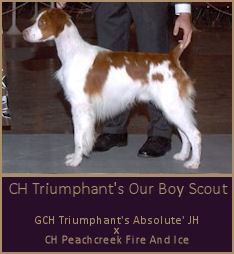 CH Triumphant's Our Boy Scout