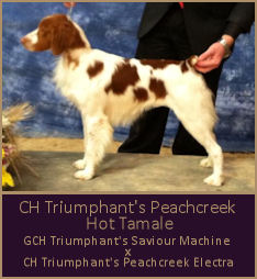 CH Triumphant's Peachcreek Hot Tamale