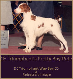 CH Triumphant's Pretty Boy-Pete