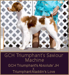 BIS BISS GCH Triumphant's Saviour Machine