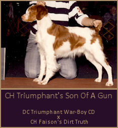 CH Triumphant's Son Of A Gun