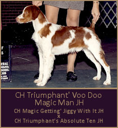 CH Triumphant' Voo Doo Magic Man JH