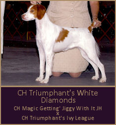 CH Triumphant's White Diamonds